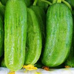 cucumber wholesale price