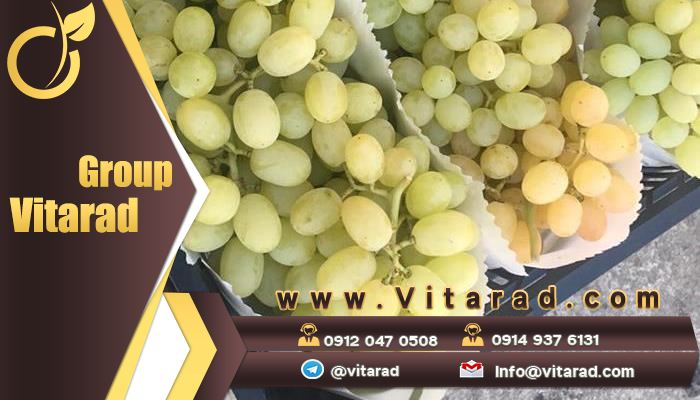 Features and benefits of Iranian Rish baba grape