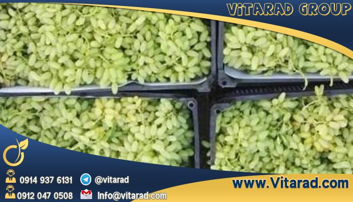 Export Grapes From Iran