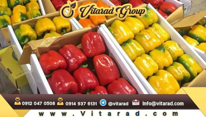 Specialized export of colored bell pepper to Iraq and other countries